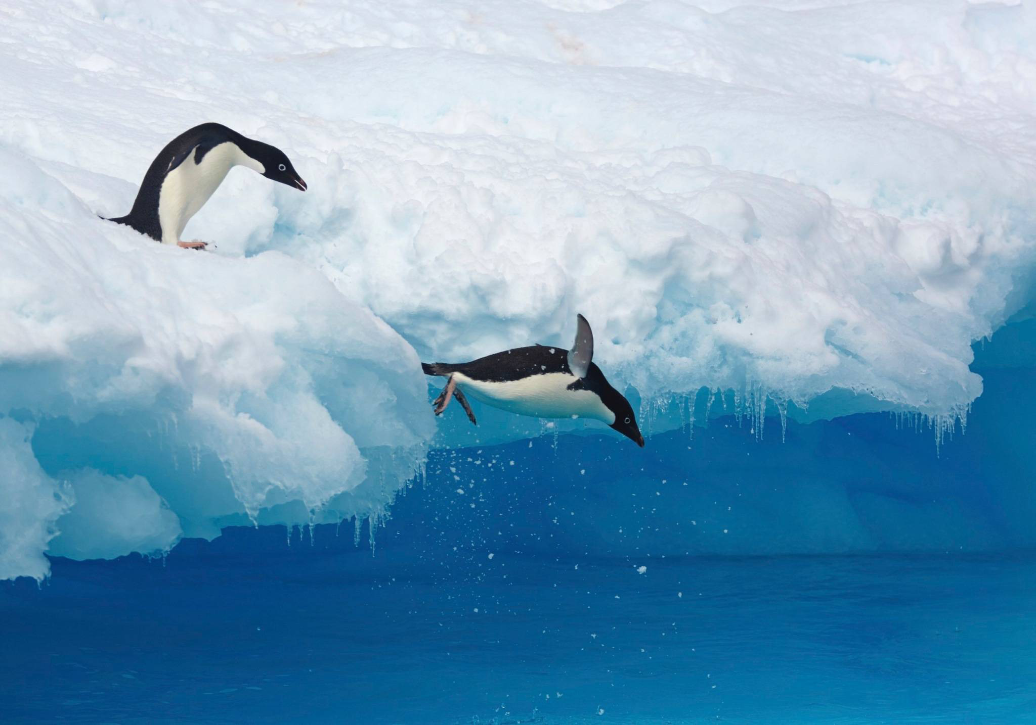 Antarktis. © Markus Eichenberger